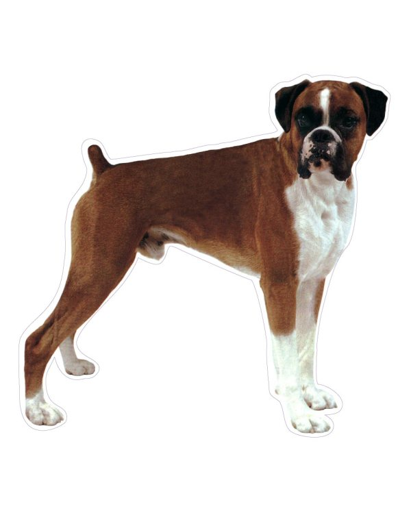 Boxer Dog Magnet or Sticker for Indoor and Outdoor