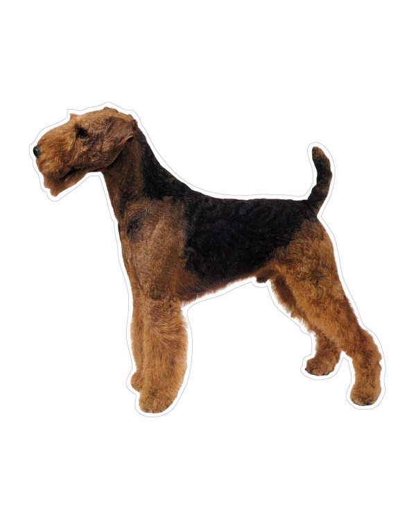 """Airedale Terrier Magnet or Sticker for Indoor or Outdoor Use 6"""" x 5"""""""