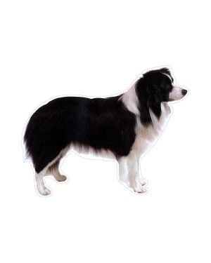 """Border Collie Magnet or Sticker for Indoor or Outdoor Use 6"""" x 5"""""""