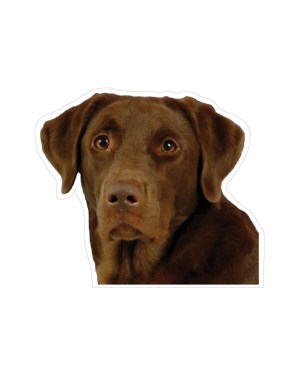 """Chocolate Lab Magnet or Sticker for Indoor or Outdoor Use 5"""" x 4"""""""