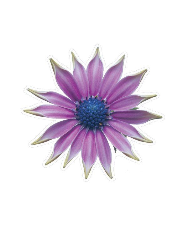 "Purple Flower Magnet or Sticker for Indoor or Outdoor Use 5"" x 5"""