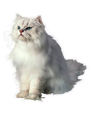 """White Cat Magnet or Sticker for Indoor or Outdoor Use 6.5"""" x 6"""""""