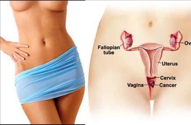 Afbeeldingsresultaat voor vagina