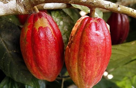 Africa produces 75% of cocoa but gets 2% of $100b chocolate market revenue