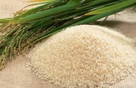 Africa imports $5b worth of rice every year – Tijani
