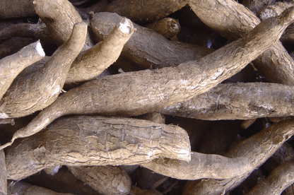 Cassava farmers educated on optimal means of production