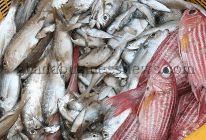 Kofi Annan supports Fisheries Transparency Initiative