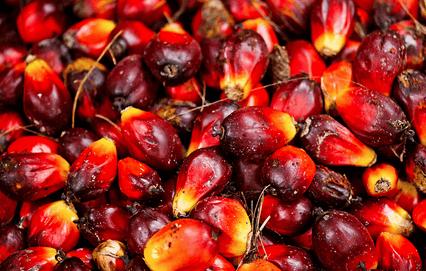 Ghana to established oil palm regulatory board soon