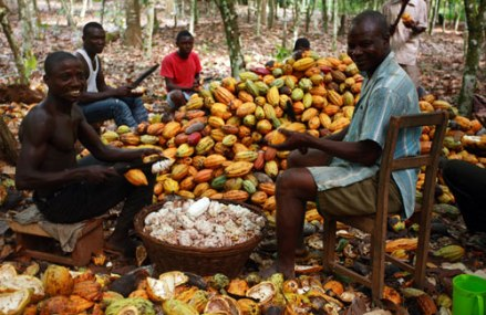 SNV Ghana facilitates tenure security for cocoa farmers