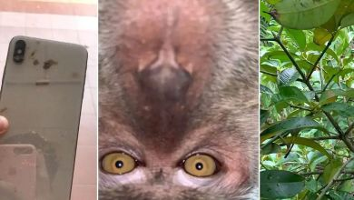 Photo of Monkey Takes Selfies With Man's iPhone He Steals, Takes Selfies & Dumps It In The Jungle (Video)
