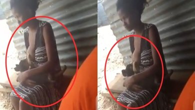 Photo of Lady Seen Breastfeeding A Dog, Netizens React – Video