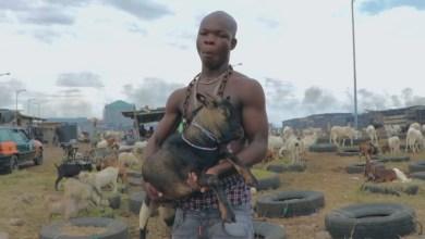 Goat by AY Poyoo