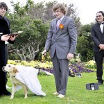 HUH!! A MAN MARRIES A DOG IN CARLIFONIA