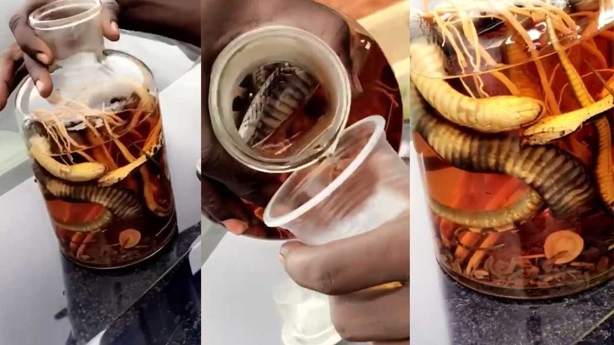 Locally made bitters stuffed with a live snake causes stir on social media (+Video)