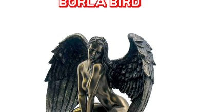 Photo of Medikal – Borla Bird (Prod. by Chensee Beatz)