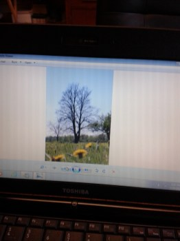 Apple Trees in Fonthill photograph