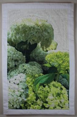 Hydrangea arborescens, Annabelle