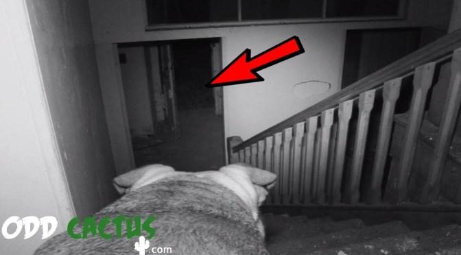 五個狗看到了主人看不到的靈異現象