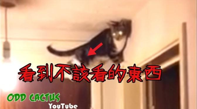 五個貓看到了主人看不到的靈異現象影片