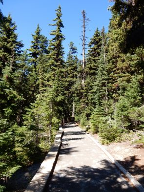 A view of the short path to the Washington Pass overlook.