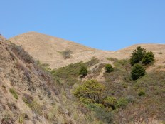 A typical California landscape at Fort Ross Historic Park: brown grass, green trees, and blue skies.
