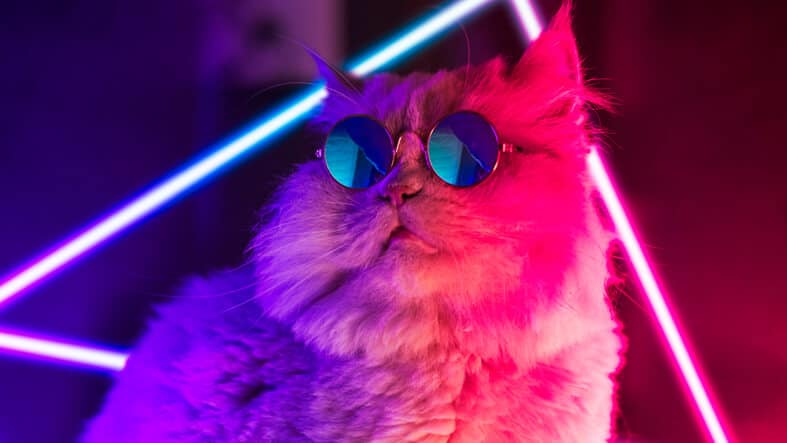 """Featured image for """"Ghost Production Services – For the cool cats"""""""