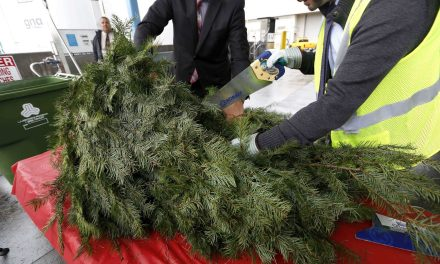 Where to Recycle Your Christmas Tree