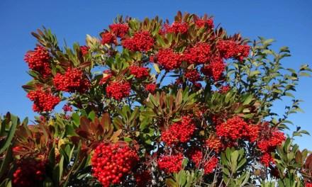 Public Hearing: Protected Tree Code Amendment