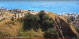 Ischia vigna mille anni