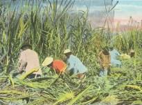 corso tropicale giovanni ceccarelli miscelazione tropicale
