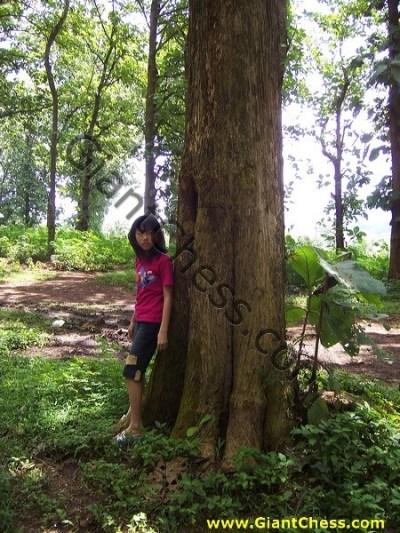 Teak Wood Plantations in Java Island by GiantChess.com | 16.18