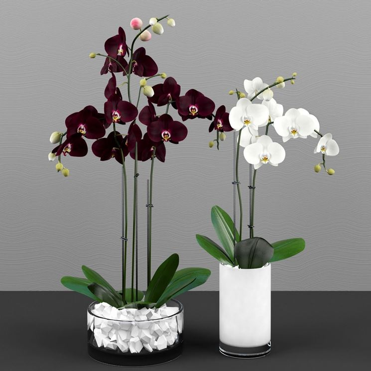 Orchidea Cura Orchidee Come Curare Lorchidea