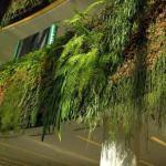 I giardini verticali a Parigi e Londra
