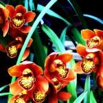Orchidee, che passione!