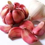 Coltivare l'aglio per le sue proprietà terapeutiche