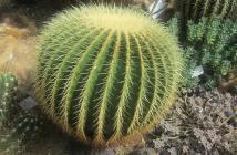 come coltivare cactus