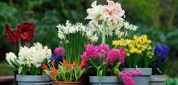 fiori-invernali ft evidenza
