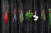 quali spezie coltivare in giardino