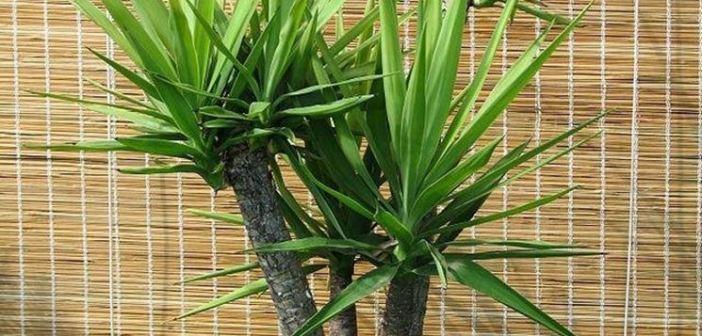Le migliori piante da appartamento per arredare la propria casa