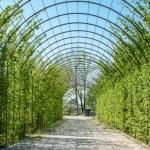 Come scegliere le piante rampicanti? Tutto quello che c'è da sapere