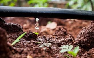Risultato immagini per irrigazione a goccia