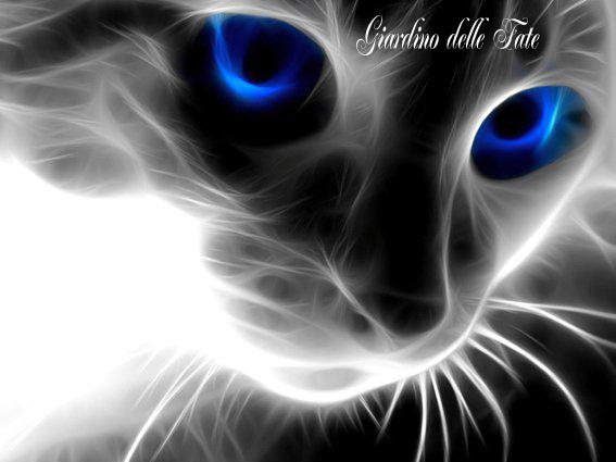 gattocancro