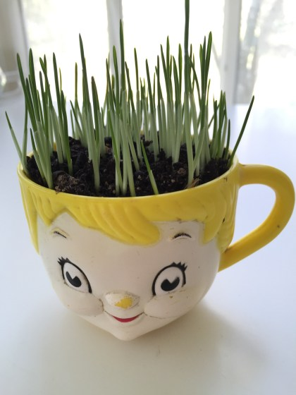 cup planter with cat grass