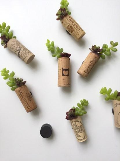 succulent/cork magnets