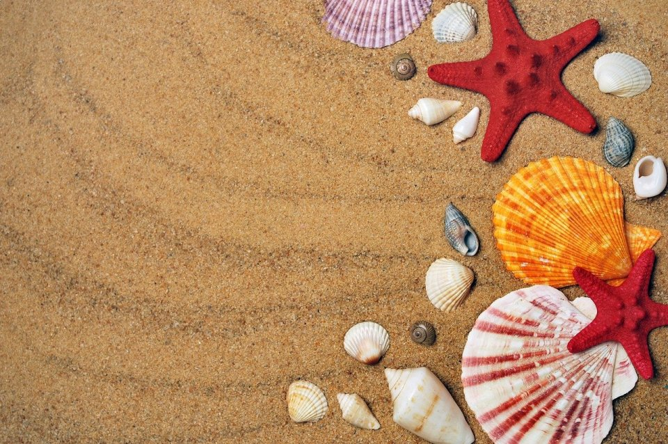 starfishes, sand, shells-1351559.jpg