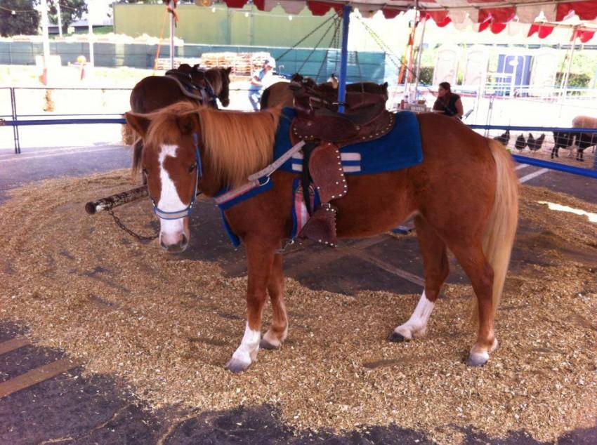 Book a Pony Party on GigSalad