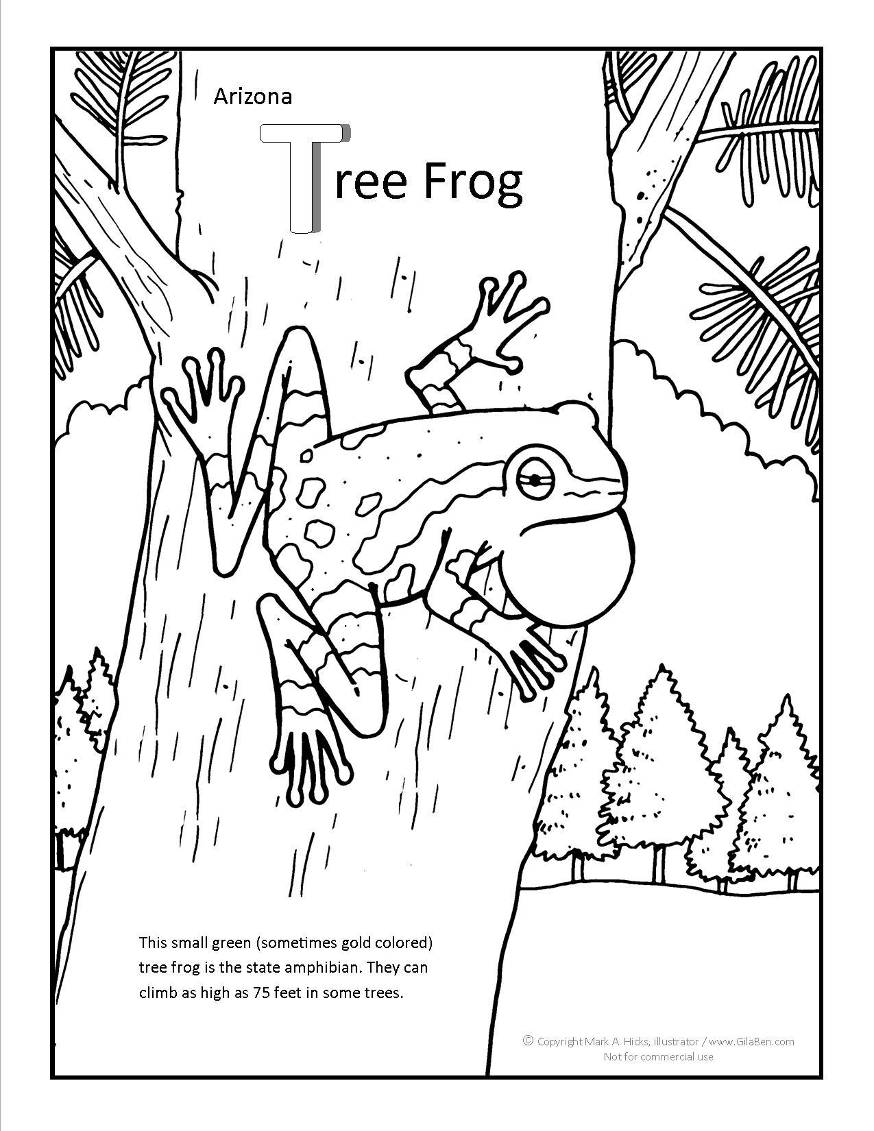 Arizona Tree Frog Coloring Page
