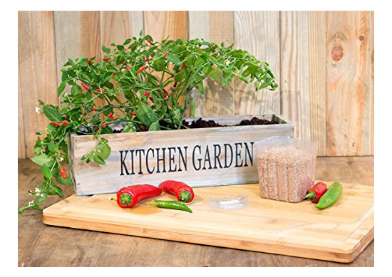 Grow Your Own Chilli Garden