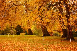 Golden Gate Park bursts with color during the season of changing autumn leaves.