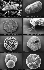 Example of marine microfossils